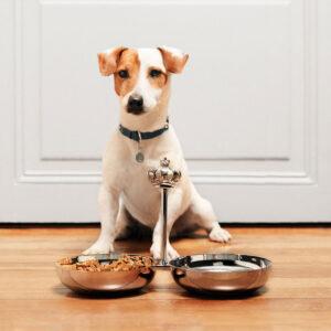 ROYAL-JACK-EATING-TIME